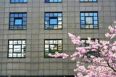 De blauwe vensters van de lente Stock Fotografie