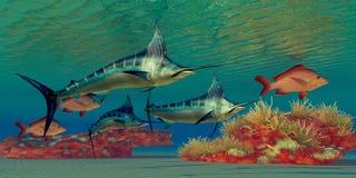 De Ertsader van de marlijn royalty-vrije illustratie