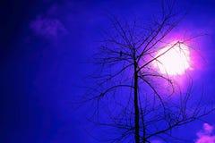 De blauwe vogel van nachthalloween op de dode boom Stock Afbeeldingen