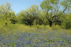 De blauwe Weide van de Bonnet stock foto