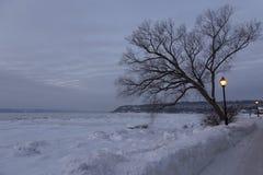 De blauwe de wintermening van de uurochtend van een sneeuw behandelde straat en naakte boom in silhouet royalty-vrije stock foto