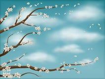 de blauwgroene achtergrond van de de lentebloesem Stock Afbeeldingen