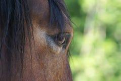 De blik van het paard Stock Foto's