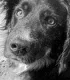 de blik van liefde in zwart-wit Stock Afbeeldingen