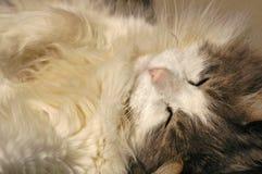 De Blissed gatito hacia fuera Fotografía de archivo libre de regalías