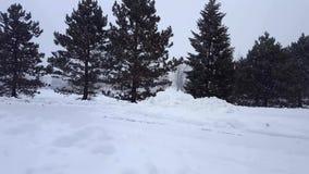 De Blizzard van het sneeuwonweer met Altijdgroene Bomen Sneeuwende Aardscène met Boomgebied Sneeuw het Noordenweer Toneel stock videobeelden