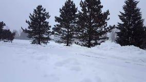 De Blizzard van het sneeuwonweer met Altijdgroene Bomen Sneeuwende Aardscène met Boomgebied Sneeuw het Noordenweer Toneel stock footage