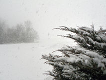 De blizzardvoorwaarden van de sneeuwrukwind Stock Afbeelding
