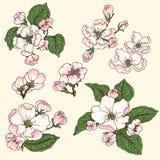 De bloei van Apple Royalty-vrije Stock Afbeeldingen