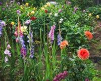 De bloei van bloemen in de tuin Stock Afbeelding