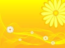 De bloei van bloemen in geel Stock Afbeeldingen