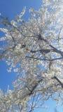 De bloei van de de lentetijd stock afbeeldingen