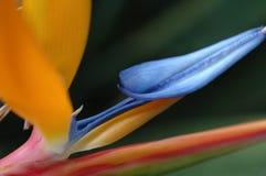 De bloei van de kleur Stock Afbeeldingen