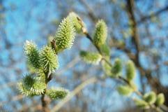 De bloei van de lente Stock Foto's