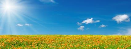 De bloei van de lente Royalty-vrije Stock Fotografie
