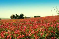 De bloei van de lente, kleurrijk prairielandschap. Sicilië Royalty-vrije Stock Afbeelding