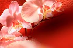 De bloei van de orchidee in water Stock Fotografie