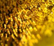 De bloei van de zonnebloem Stock Foto