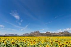 De bloei van zonnebloemgebieden in het midden van de vallei en de blauwe hemel Royalty-vrije Stock Foto