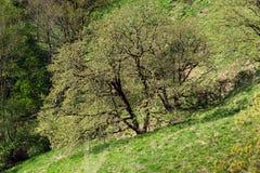 De bloeiende bomen van de lente Stock Fotografie