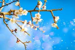 De bloeiende geuren van de lente. Stock Foto