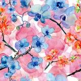 De bloeiende Japanse bloemblaadjes en de bloemen van de kersenboom Stock Foto's
