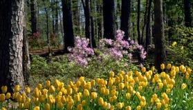 De bloeiende Lente stock fotografie