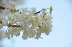 De bloeiende lente Royalty-vrije Stock Fotografie