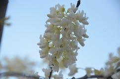 De bloeiende lente Royalty-vrije Stock Afbeeldingen