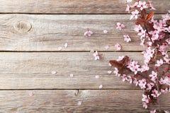 De bloeiende tak van de lente stock afbeeldingen