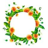 De bloeiende takken van de waterverflente, paardebloembloemen Royalty-vrije Stock Afbeeldingen