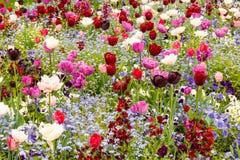 De bloeiende Weide van de Lente Stock Afbeeldingen