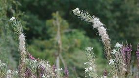 De bloeiende witte bloemen, sluiten omhoog stock video