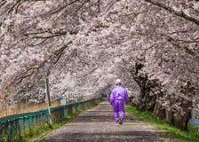 De bloeiweg van kersenbloesems, Japan Stock Foto