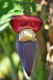 De bloeiwijze van BananaStock Afbeeldingen