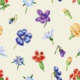 De bloeiwijzen van de getrokken bloemen Stock Foto