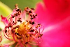 De bloem Stock Foto's