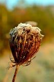 De bloem stock fotografie