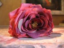 0033892 - de bloem Royalty-vrije Stock Foto