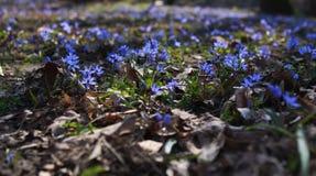 De bloem Stock Afbeeldingen