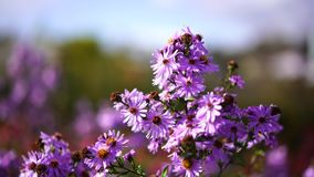 De bloem beweegt zich in de wind stock footage
