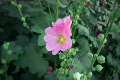 De bloem bloeit zeer prachtig stock foto
