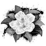 De Bloem die van de hibiscus op Witte Achtergrond trekt Royalty-vrije Stock Fotografie