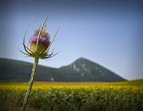De bloem en de berg Stock Afbeeldingen