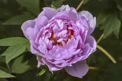De bloem en de bij Royalty-vrije Stock Foto's