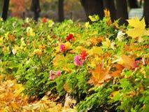De bloem en de bladeren van de herfst Royalty-vrije Stock Afbeelding