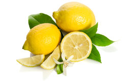 De bloem en de citroenen van de citroenenboom Stock Afbeeldingen