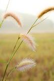 De bloem en de dauw van het aardgras Stock Afbeeldingen