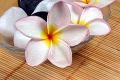 De bloem en de kiezelstenen van Frangipane in glaskom Royalty-vrije Stock Afbeeldingen