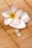 De bloem en de kiezelstenen van Frangipane op de rotanachtergrond Stock Afbeelding